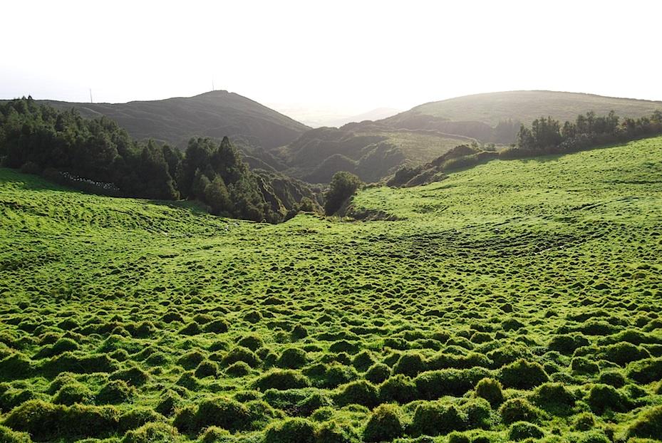 Azoren Wiesen