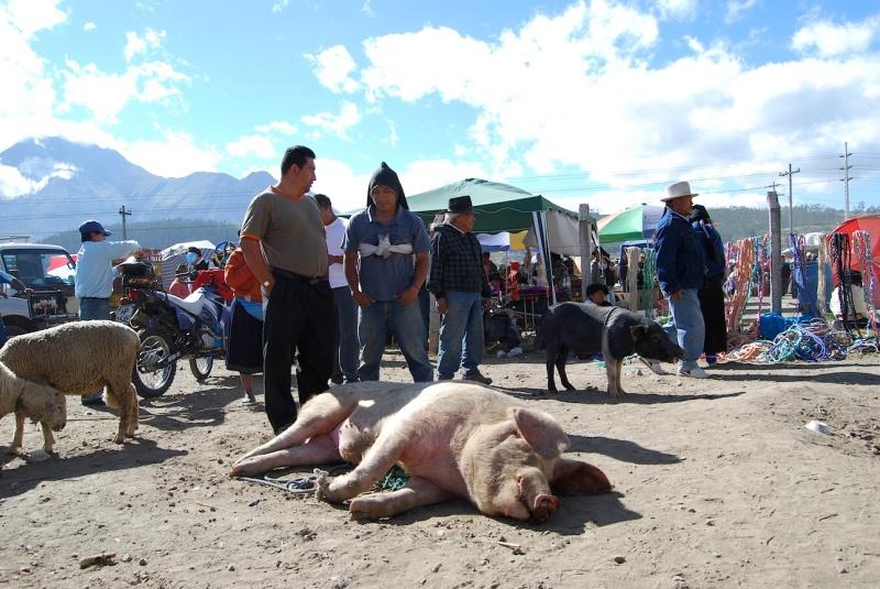 Wo Schweine quieken und Quacksalberquäken