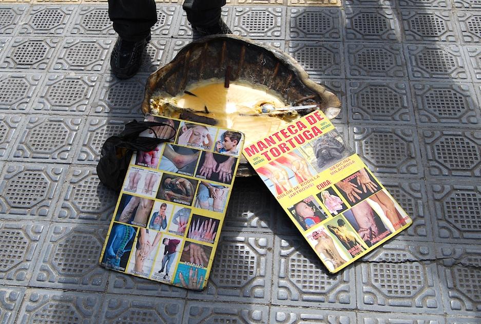 Schildkrötenfett hilft gegen Vielerlei.