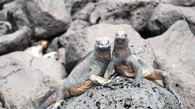 Unter Zwergdrachen und Riesenschildkröten