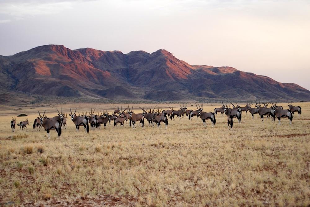 Namibia Antilopen