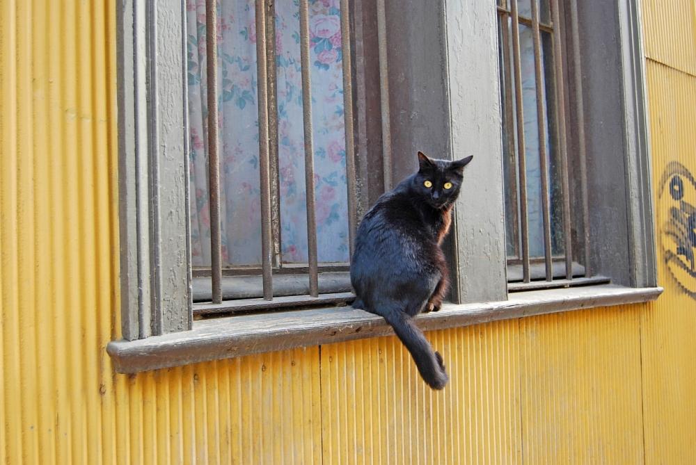 Valparaiso Katze
