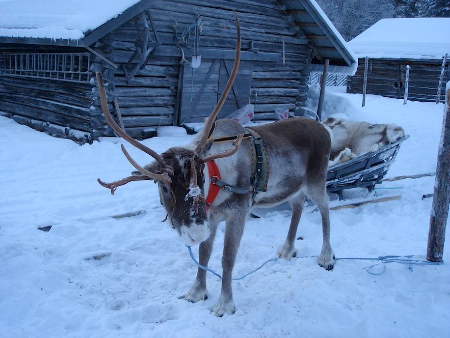 Finnland Rentier