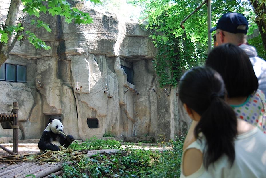 China Pandapark3