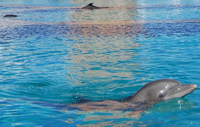 Delfine küssen auf denBahamas