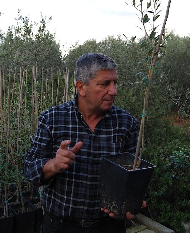 Malta_Olivenoel