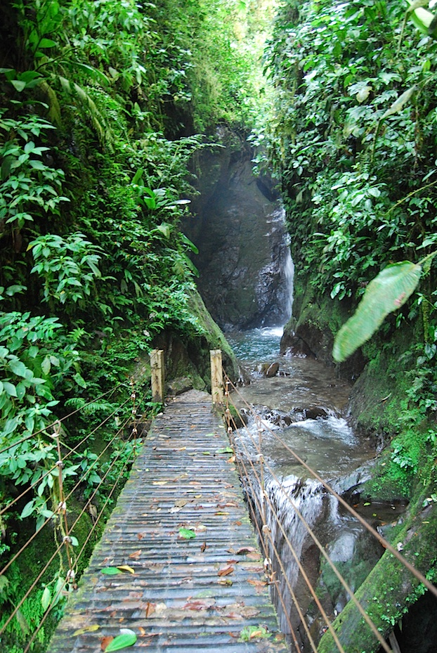 Ecuador_Naturpark_Mindo_Nambillo