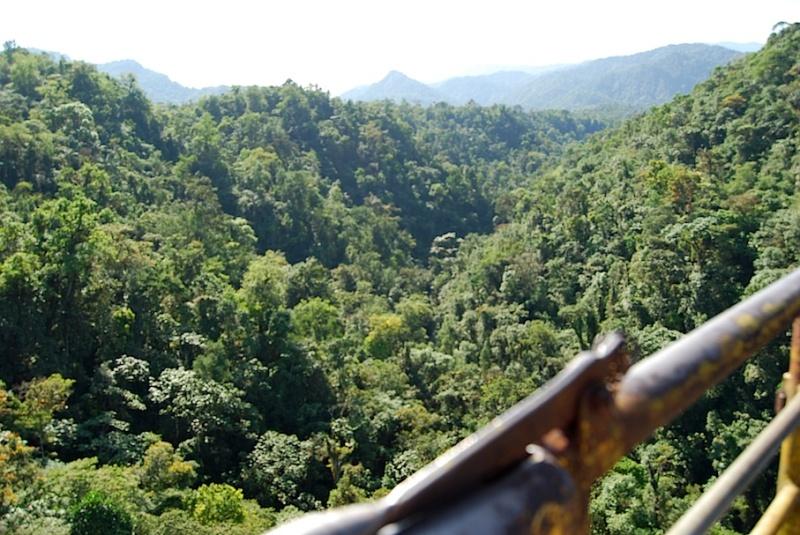 Drahtseilakt im Regenwald