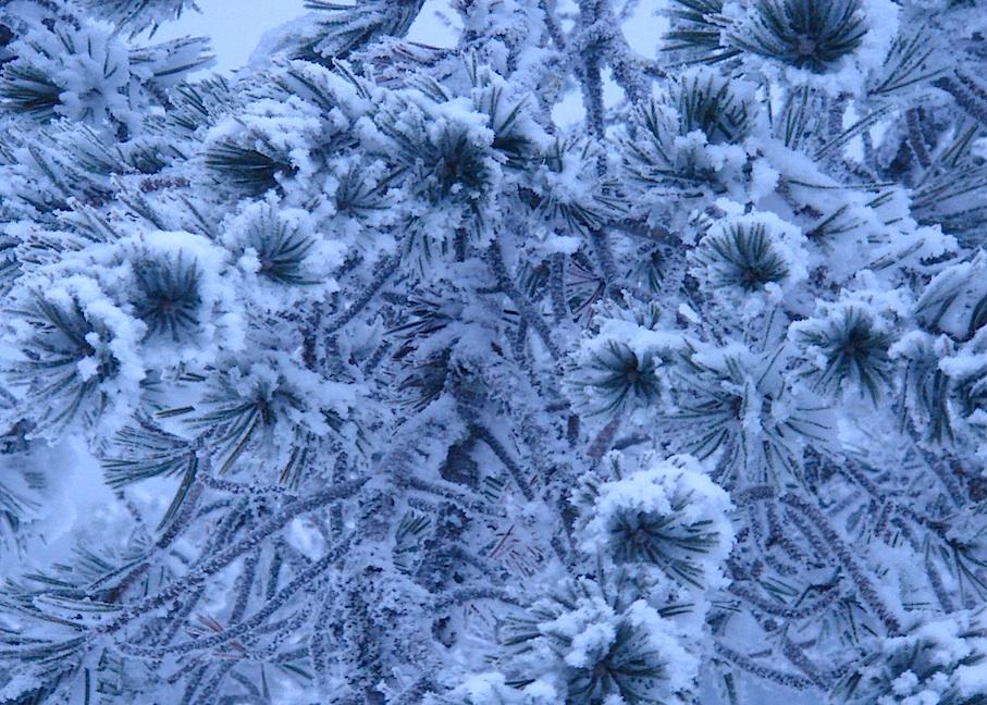Finnland_Winter_Eisblumen
