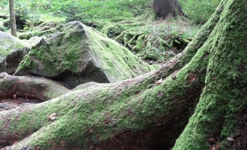 Wo die schwäbelnden Gnomewohnen