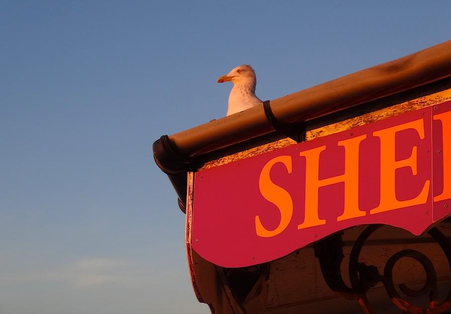 Brighton_Pier_Abendlicht_Moewe