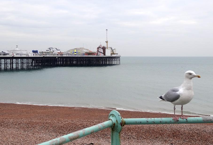 Brighton_Pier_Moewe2
