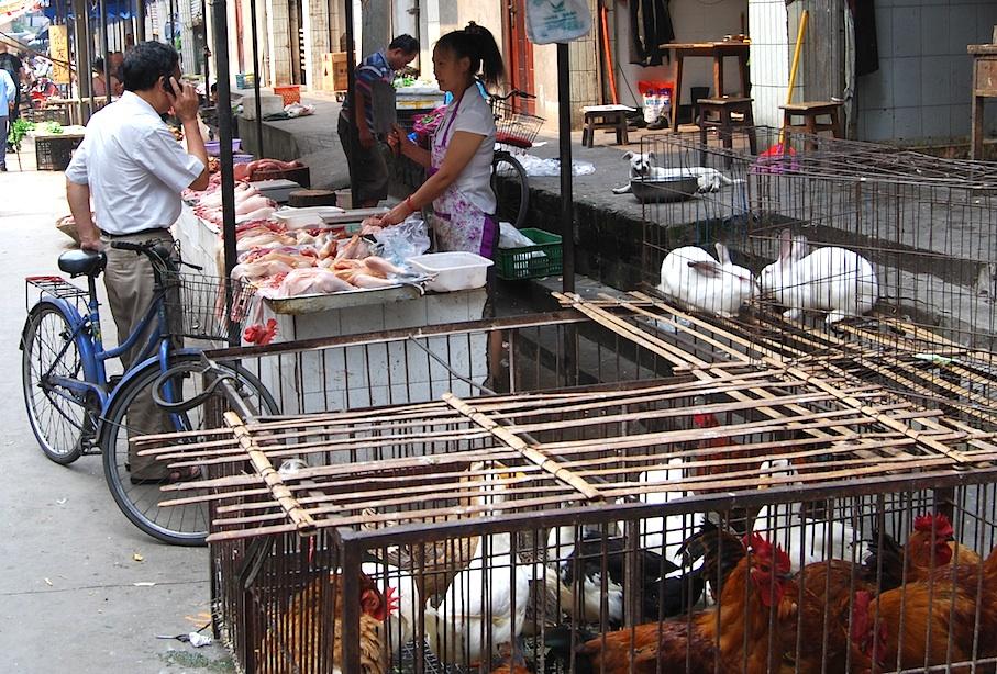 China_Sichuan_Markt_Kaninchen