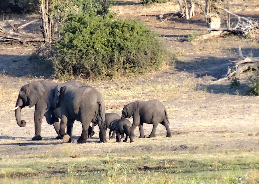 Botswana_Chobe_Elefantenherde