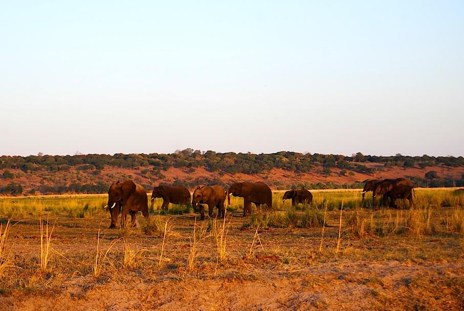 Botswana_Chobe_Elefantenherde_Sonnenuntergang