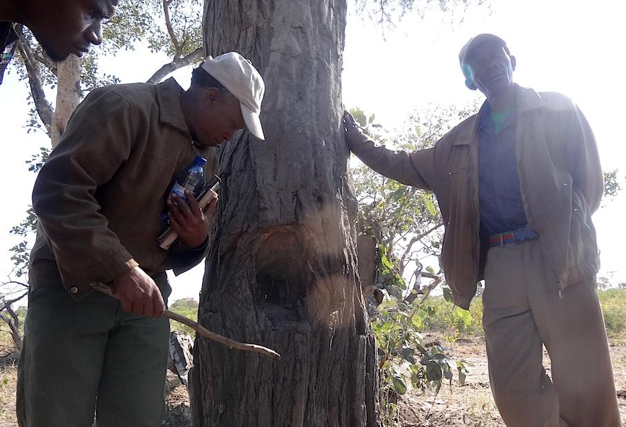 Namibia_Khwe_Spurenlesen