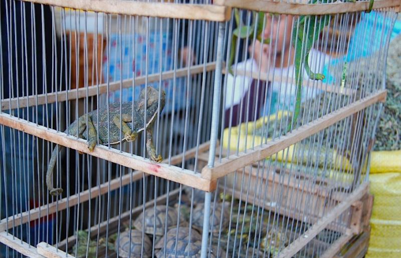 Wie der Markt, so das Land (Teil 7): Marokko, bei Kupferschmieden und Chamäleonhändlern