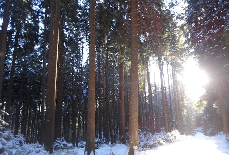 Harz_Brocken