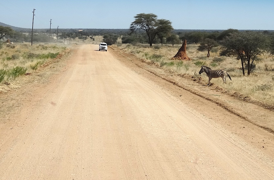 Namibia_Strasse_Zebra