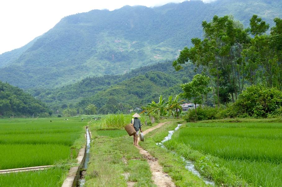 vietnam_mai_chau_reisfelder