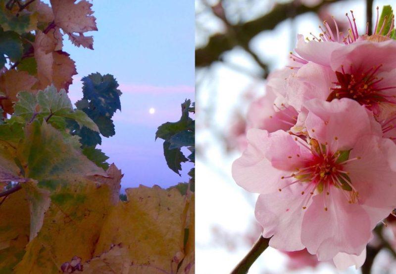Dem Sommer hinterher und dem Frühlingentgegen